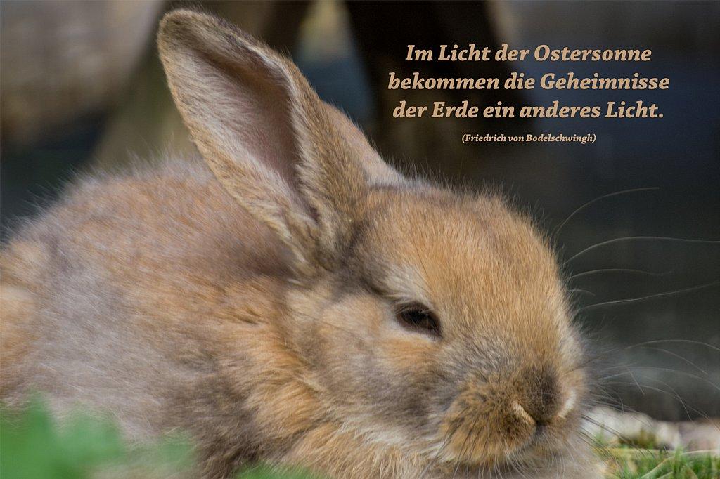 Kaninchen-3.jpg