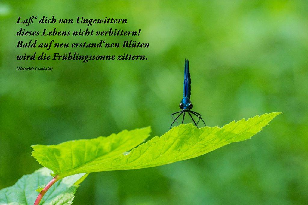 Libelle.jpg
