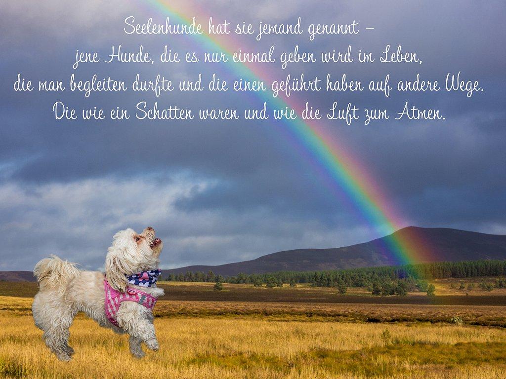 Regenbogen-Bonnie.jpg
